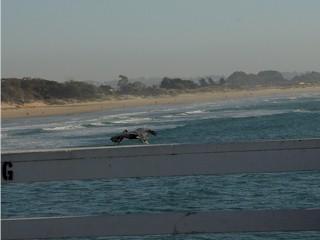 Sand dunes south of Pismo Beach, California.